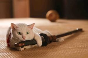 「猫侍」猫メイン