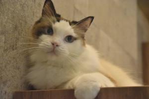 きゃりこ猫