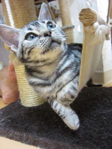 ねこ祭りnear 猫セミナー